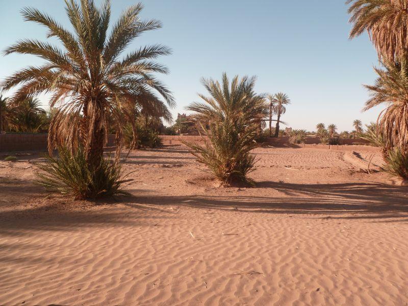 [Maroc Camp/Dernières nouvelles] Mon nouveau camping à Mhamid P1010564_1