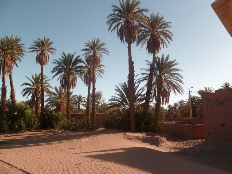 [Maroc Camp/Dernières nouvelles] Mon nouveau camping à Mhamid P1010565_1