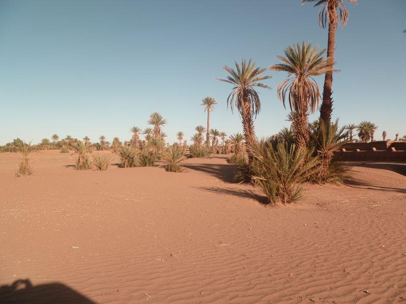 [Maroc Camp/Dernières nouvelles] Mon nouveau camping à Mhamid P1010567_1