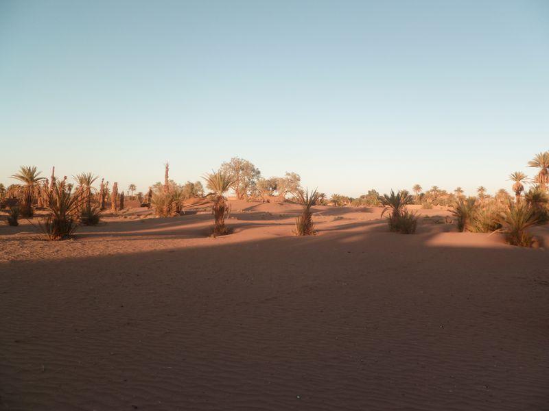 [Maroc Camp/Dernières nouvelles] Mon nouveau camping à Mhamid P1010585_1